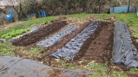 2016年の家庭菜園 その1